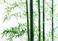竹木加工APP,环保生活的最佳选择